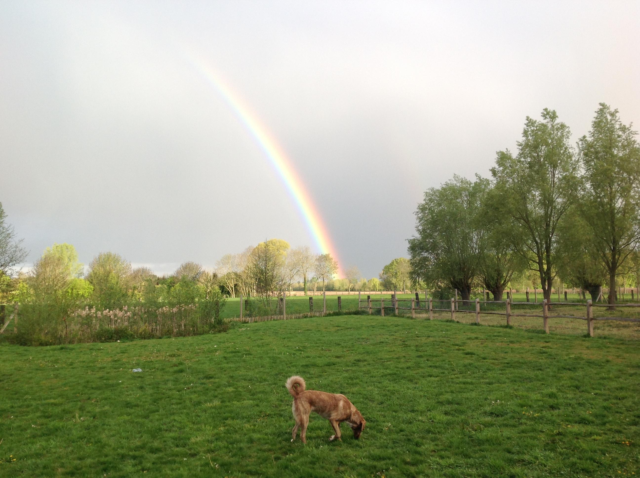 Hof Rosa Canina