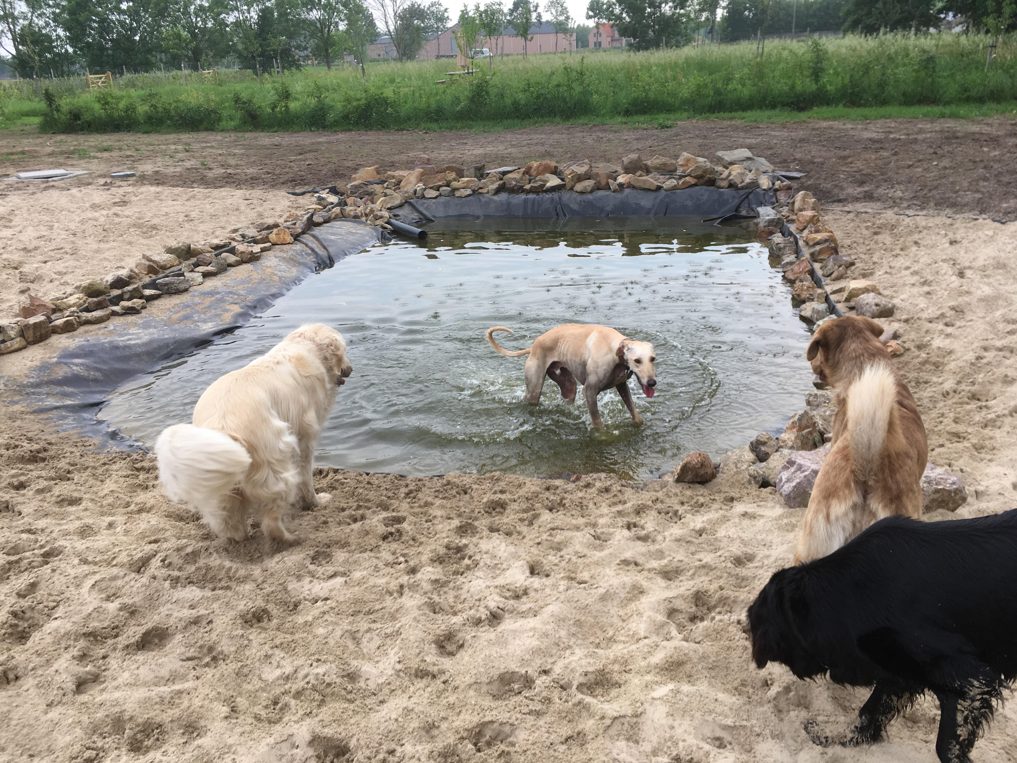 Hondenhotel