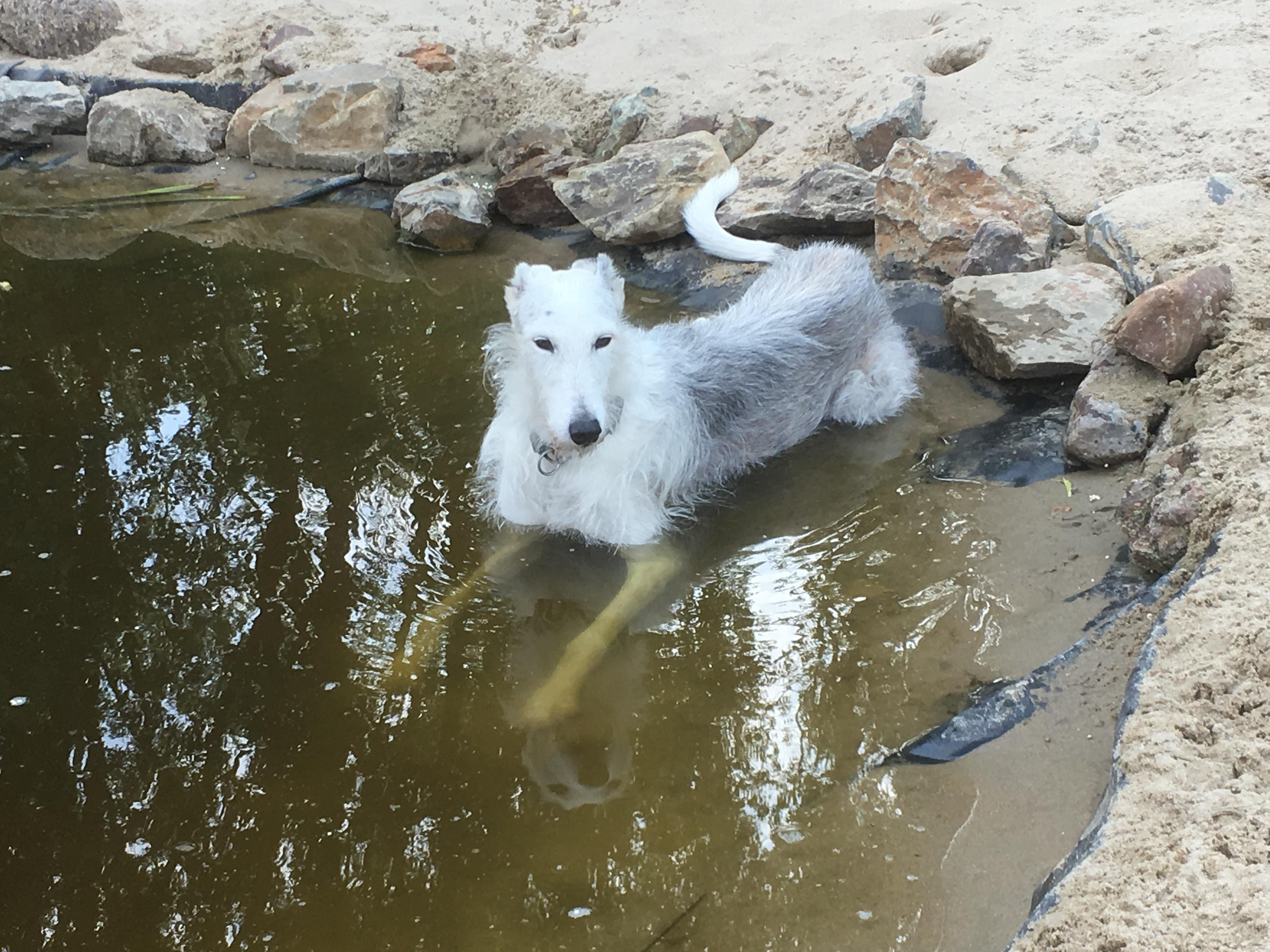 Hondenpension Hof Rosa Canina